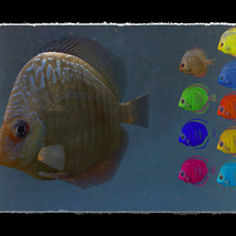 3D Underwater Fauna: Aquarium Fishes image 1