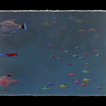 3D Underwater Fauna: Aquarium Fishes image 3
