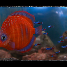 3D Underwater Fauna: Aquarium Fishes image 5