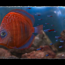 3D Underwater Fauna: Aquarium Fishes image 6
