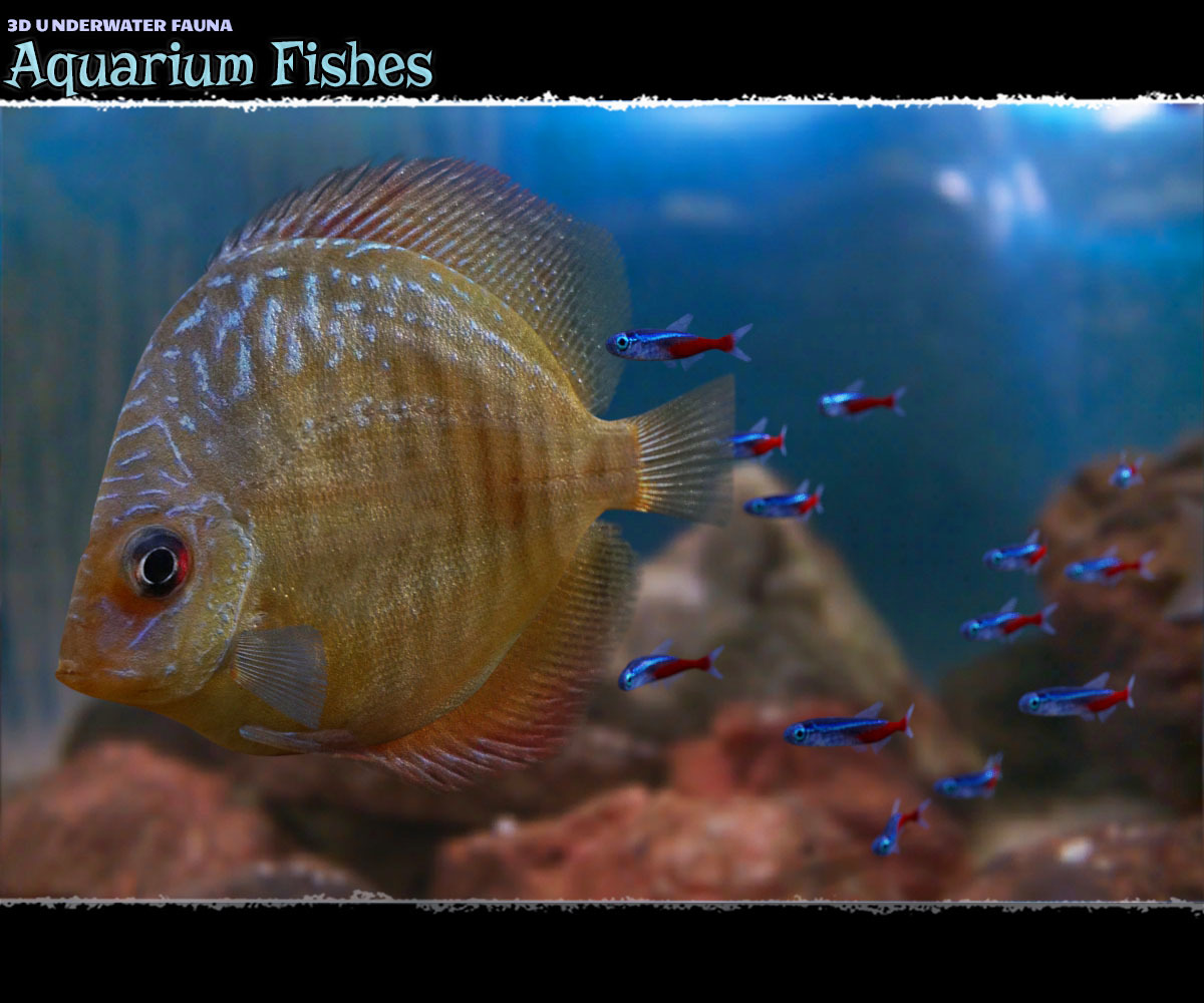 3D Underwater Fauna: Aquarium Fishes - Extended License
