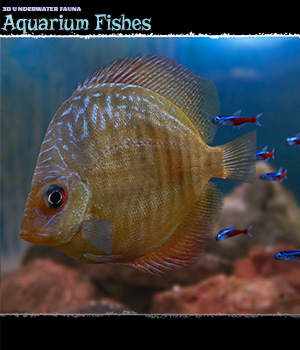 3D Underwater Fauna: Aquarium Fishes - Extended License 3D Models Extended Licenses ShaaraMuse3D