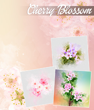 Cherry Blossom 2D Graphics Merchant Resources Atenais