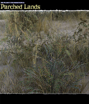 Plant Foundations: Parched Lands - Extended License 3D Models Extended Licenses ShaaraMuse3D