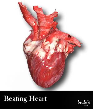 Beating Heart - Extended License 3D Game Models : OBJ : FBX 3D Models Extended Licenses biala