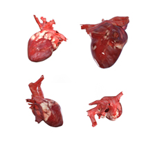 Beating Heart - Extended License image 2