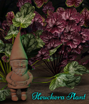 Heuchera Plant For Daz Studio Iray 3D Models fictionalbookshelf