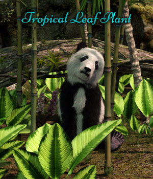 Tropical Leaf Plant For Iray Plus Mirrored Versions 3D Models fictionalbookshelf