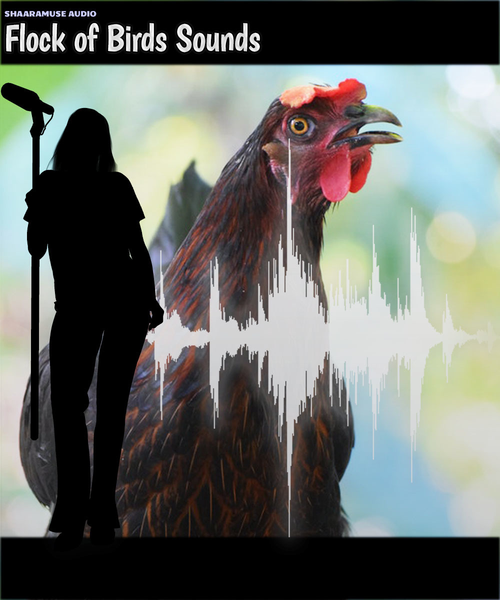 Shaaramuse Audio: Chickenhouse Sounds - Extended License