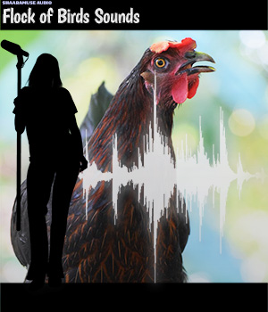 Shaaramuse Audio: Chickenhouse Sounds - Extended License Extended Licenses Music  : Soundtracks : FX ShaaraMuse3D