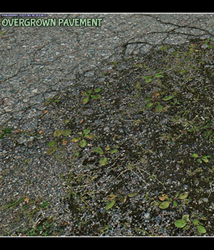 Panoramic Texture Resource: Overgrown Pavement DS IRAY 2D Graphics Merchant Resources ShaaraMuse3D