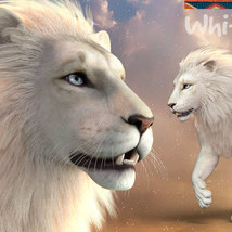 CWRW White Lion for the HiveWIre Lion Family image 1