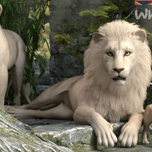 CWRW White Lion for the HiveWIre Lion Family image 4