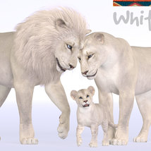 CWRW White Lion for the HiveWIre Lion Family image 5