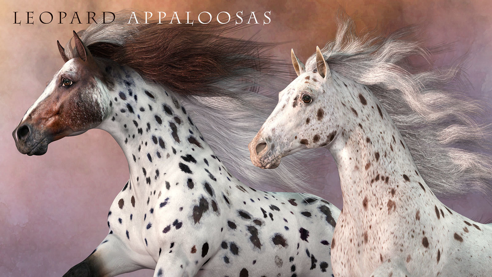 CWRW Leopard Appaloosas for the HiveWire Horse