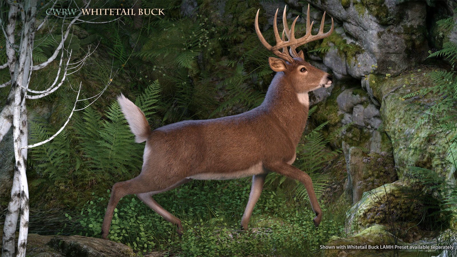 CWRW Whitetail Buck by cwrw