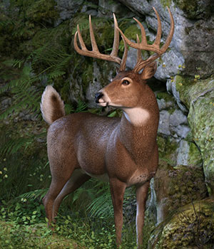 CWRW Whitetail Buck 3D Models cwrw