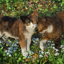 CWRW Calicos for the HW House Cat image 1