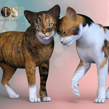 CWRW Calicos for the HW House Cat image 2