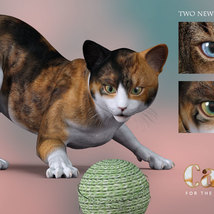 CWRW Calicos for the HW House Cat image 5