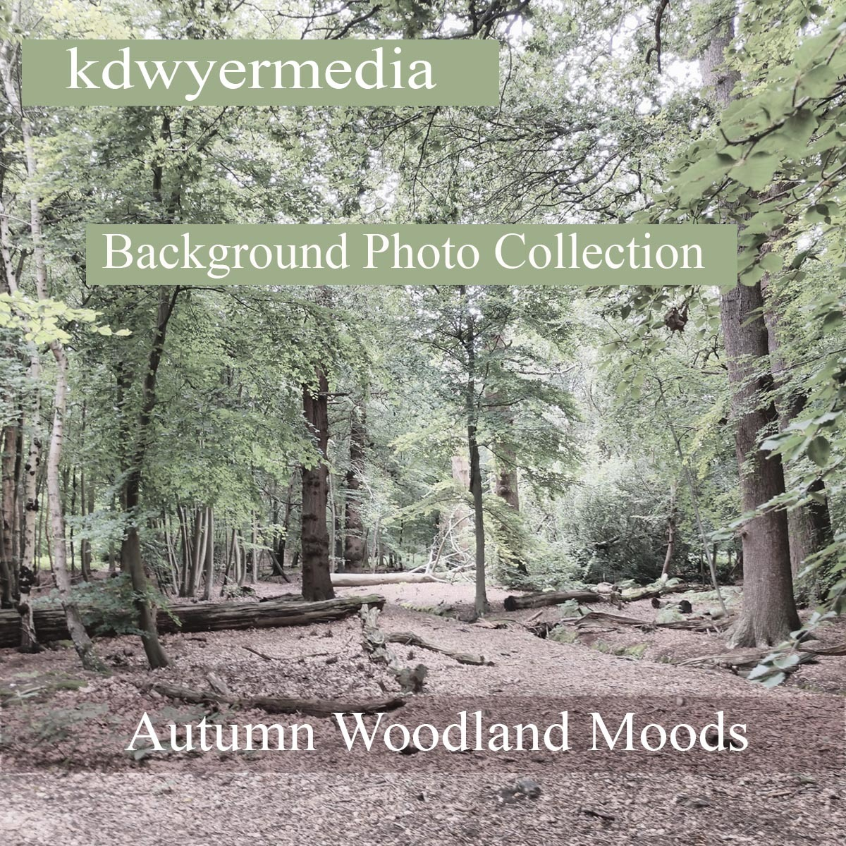 Autumn Woodlands Moods by kdwyermedia