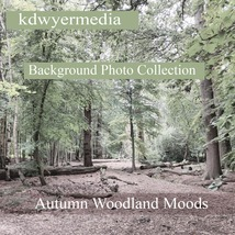 Autumn Woodlands Moods image 1