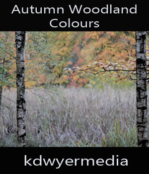 Autumn Woodland Colours 2D Graphics kdwyermedia