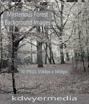 Mysterious Forest 2D Graphics kdwyermedia