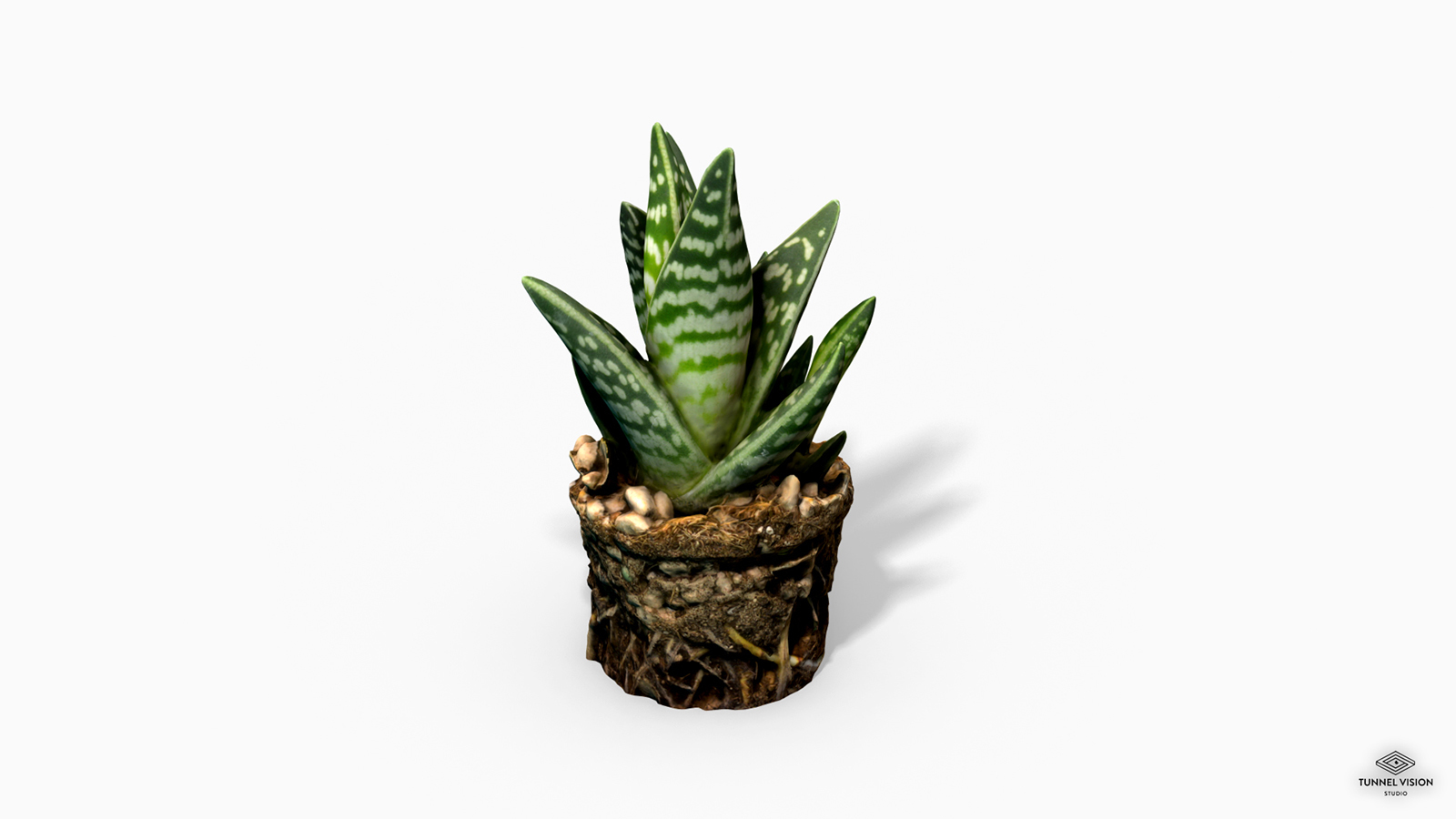 Gasteria Cactus Plant - Photoscanned PBR - Extended License