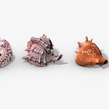 Photorealistic Seashells Collection - Scanned PBR - Extended License image 1