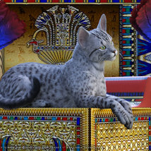 CWRW Exotics 1 for the HW House Cat image 2