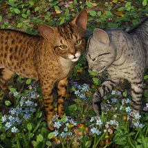 CWRW Exotics 1 for the HW House Cat image 3