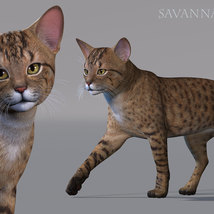 CWRW Exotics 1 for the HW House Cat image 5