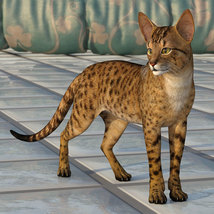 CWRW Exotics 1 for the HW House Cat image 7