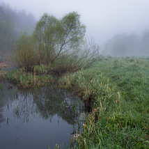 Stream and forest image 3
