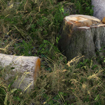 3D Scenery: Log Work - Extended License image 1