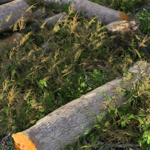3D Scenery: Log Work - Extended License image 2