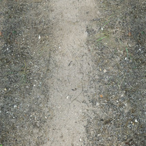 Panoramic Texture Resource: Paths 1 - Extended License image 5