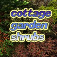 Cottage garden shrubs 3D Models martinjfrost