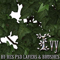 Ivy - PSD Layers & Brushes 3D Models 2D Graphics designfera