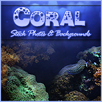 Coral Photos & Background Pack Stock Photography 2D And/Or Merchant Resources Sveva