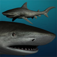 Tiger shark 3D Models smay