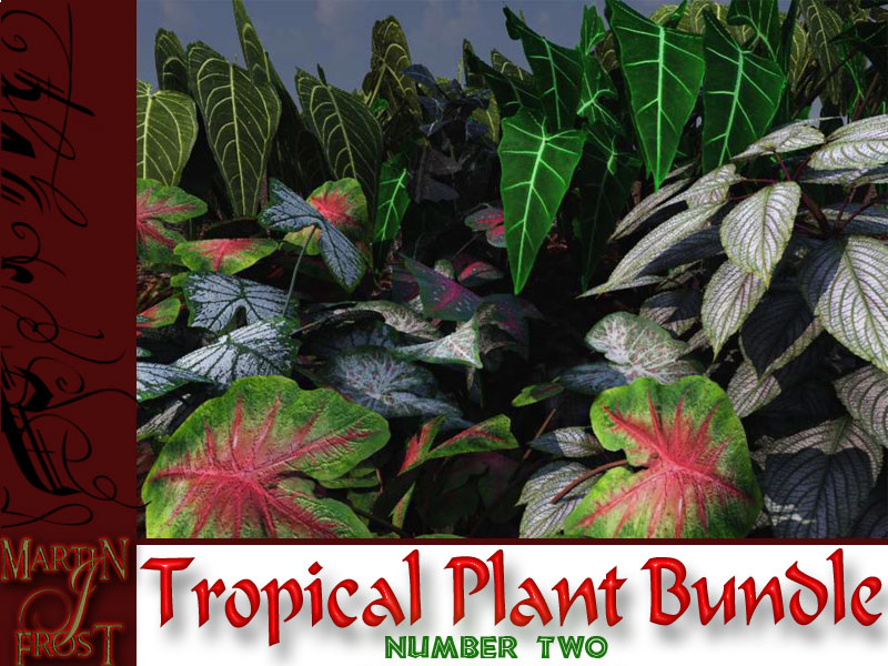 Tropical Plant bundle Number Two