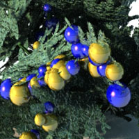 Christmas Trees for Vue  3D Models 2D martinjfrost