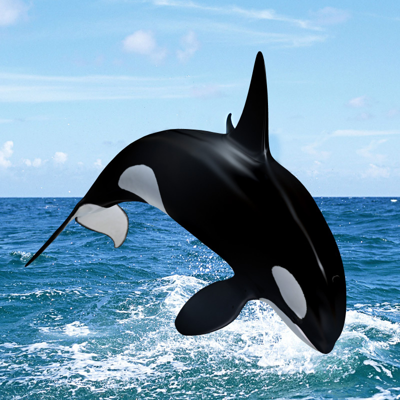 Orcas Reflejando Lo Que Mas Temes also Orcas Eyes in addition Killer Whale Orca Die Cut Vinyl Decal Pv102 furthermore Royalty Free Stock Photos Cartoon Whale Image13440358 as well Orca Cliparts. on cartoon baby killer whales