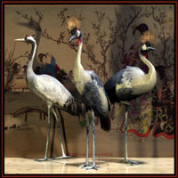 Black Crowned Crane 3D Models Roland58