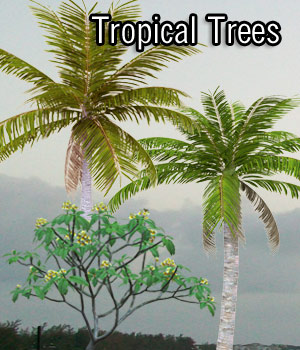 Tropical Trees (Poser & OBJ) 3D Models RPublishing