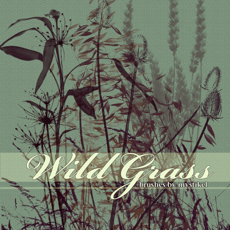 Wild Grass Brushes