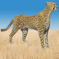 Cheetah by AM Stand Alone Figures Themed papillon68
