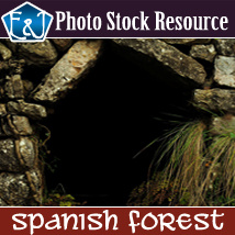 Spanish Forest 2D Graphics EmmaAndJordi